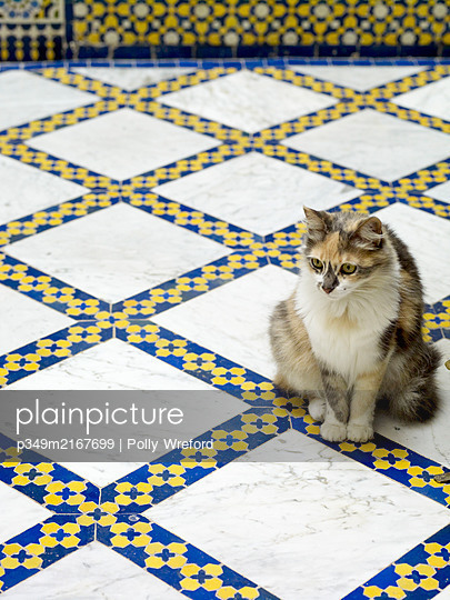 Cat sits on blue and white tiled floor, Morocco, North Africa - p349m2167699 by Polly Wreford