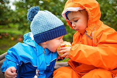 Toddlers eating apples, Abbotsford, British Columbia, Canada - p1166m2202097 by Christopher Kimmel / Alpine Edge Photography