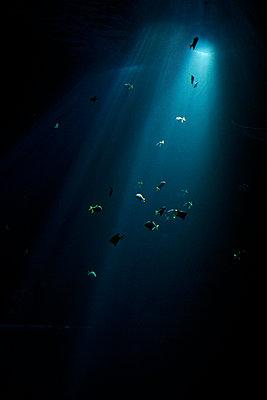 Aquarium - p2490436 by Ute Mans