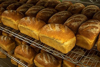 Loaves of freshly baked bread sit on cooling rack - p1166m2095577 by Cavan Images