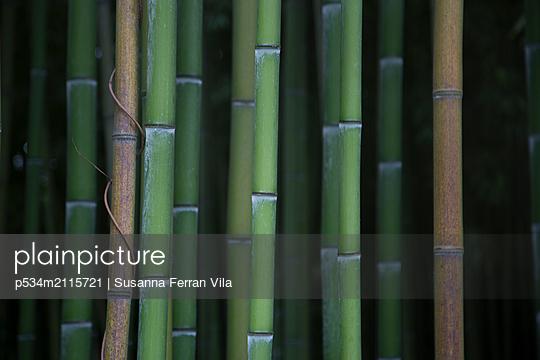 Bamboo - p534m2115721 by Susanna Ferran Vila