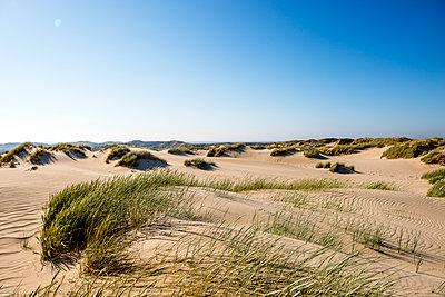 Germany, Schleswig-Holstein, Sylt, sand dunes - p300m1587927 von Ega Birk