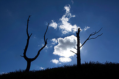 Dead tree in backlighting - p813m938432 by B.Jaubert