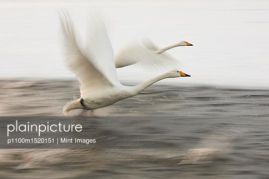 p1100m1520151 von Mint Images