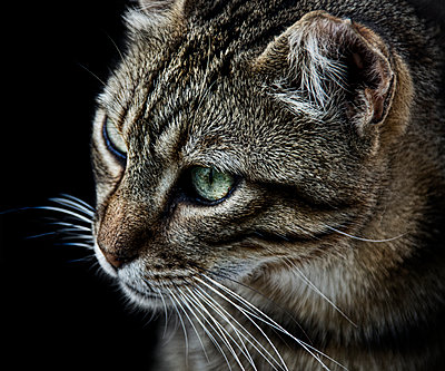 Cat - p1445m2125162 by Eugenia Kyriakopoulou