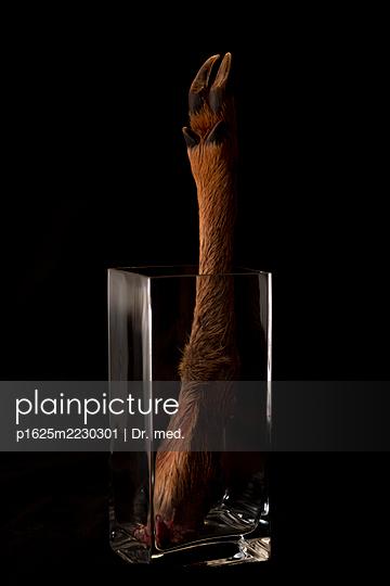 Severed deer leg in a glass jar - p1625m2230301 by Dr. med.