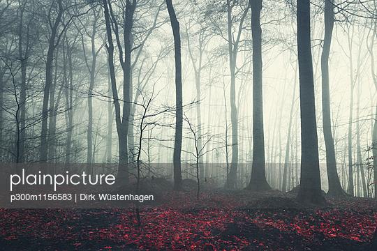 p300m1156583 von Dirk Wüstenhagen