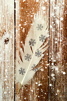 Stamped feather - p451m2133737 by Anja Weber-Decker
