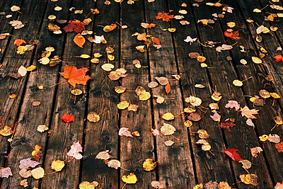 Fallen leaves on a deck - p9247979f by Image Source