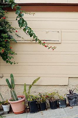 USA, California, San Francisco, flower pots at house wall at slope - p300m965566f by Biederbick&Rumpf