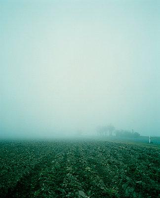 Agrarmystik - p3700046 von David Hartfiel