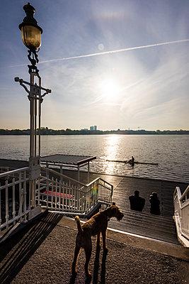 Hund an der Alster - p488m1445772 von Bias