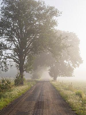 p847m1102691 von Johan Strindberg