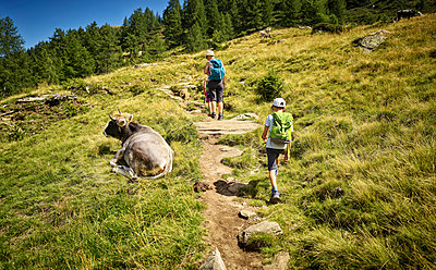 Mother with two children hiking in alpine scenery passing a cow, Passeier Valley, South Tyrol, Italy - p300m2154710 by Dirk Kittelberger