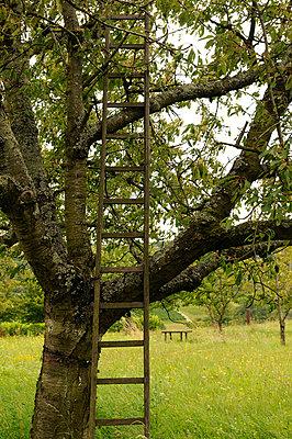 Wooden ladder - p470m954738 by Ingrid Michel