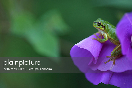 p307m700530f von Tetsuya Tanooka