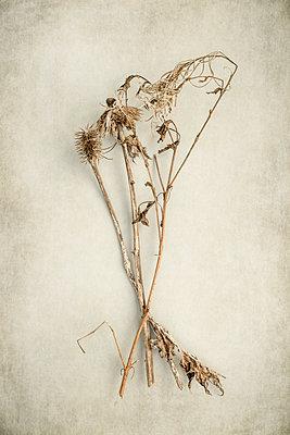 Dead plants - p1228m1425450 by Benjamin Harte