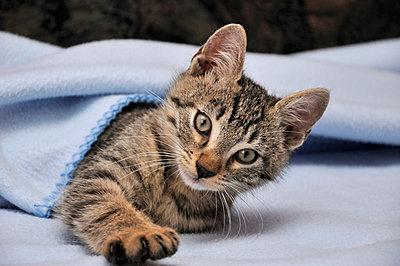 Kitten cat - p5770166 von Mihaela Ninic