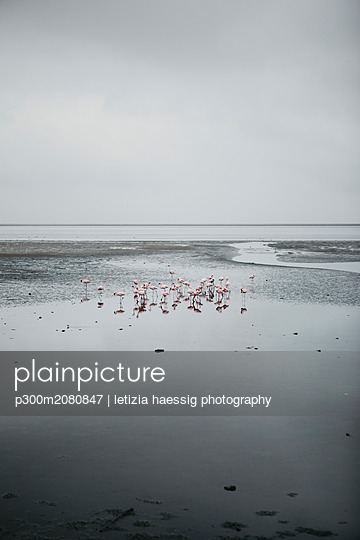 Namibia, Walvis Bay, flamingos in the sea - p300m2080847 by letizia haessig photography