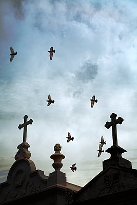 Crosses Silhouetted with birds  - p1248m2134700 by miguel sobreira
