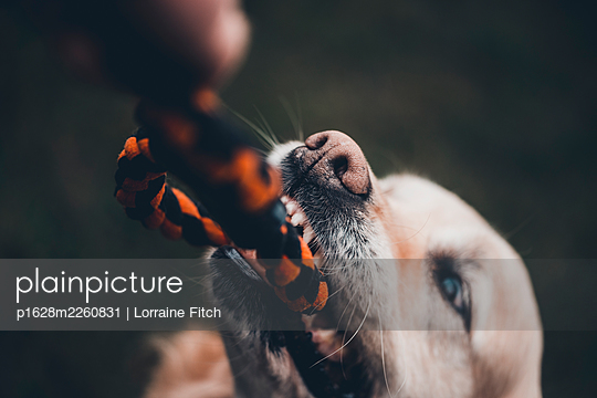 Pet owner playing with his dog - p1628m2260831 by Lorraine Fitch