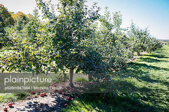 Orchard - p535m947664 by Michelle Gibson