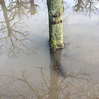 Tree in a puddle - p1401m2237570 by Jens Goldbeck