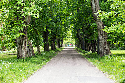 Germany, Ruegen, Putbus, alley - p300m2070306 by Maria Maar
