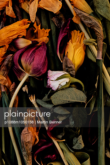 Still life - p1088m1050158 by Martin Benner