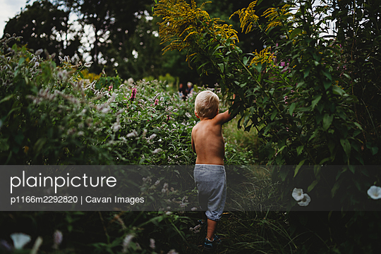 Back view of boy walking on hiking trail among green plants in summer - p1166m2292820 by Cavan Images