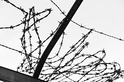 Wire fence - p1003m787802 by Terje Rakke