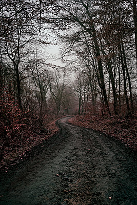 Forest path - p470m2185026 by Ingrid Michel