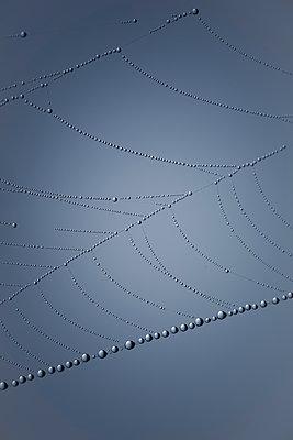 Spinnennetz - p647m1119959 von Tine Butter