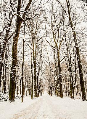 Verschneiter Wald - p999m949626 von Monika Kluza