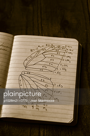 Drawing of the wings of a butterfly - p1028m2110773 by Jean Marmeisse
