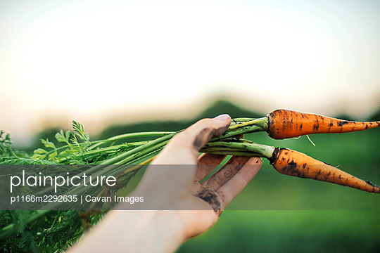 Woman holding organic carrots from backyard garden - p1166m2292635 by Cavan Images