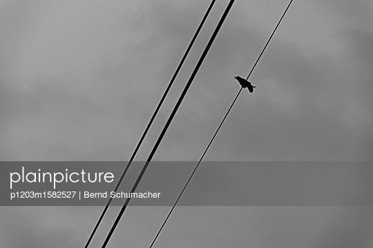 Einzelne Krähe auf einer Stromleitung - p1203m1582527 von Bernd Schumacher