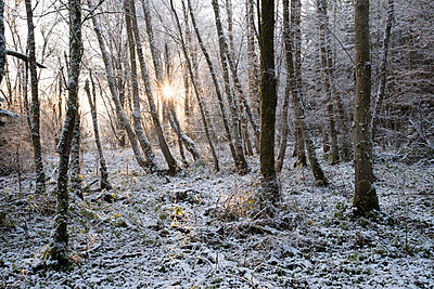 Germany, Bavaria, Geretsried, snow in alluvial forest at sunrise - p300m1355853 by Martin Siepmann