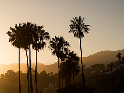 USA, Los Angeles, silhouettes of palms at evening twilight - p300m1081330f by Susan Brooks-Dammann