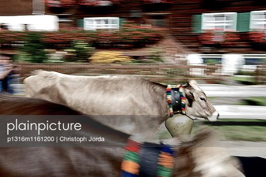 Traditioneller Viehscheid, Allgäu, Bayern, Deutschland - p1316m1161200 von Christoph Jorda