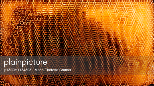 Honigwabe - p1322m1154898 von Marie-Therese Cramer