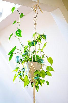 Hanging plant - p1149m2183741 by Yvonne Röder