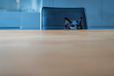 Black cat sitting on a chair hiding behind tabletop - p300m1081282f by Frank Röder