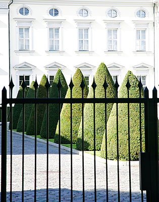 Die Buchsbaumkegel von Bellevue - p606m881717 von Iris Friedrich