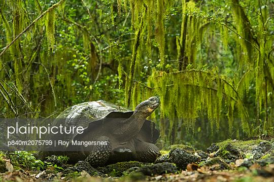 p840m2075799 von Roy Mangersnes