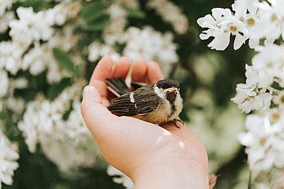 Bird in hand - p1507m2168040 by Emma Grann