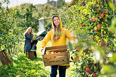 Two women harvesting apples in orchard - p300m1563227 by Peter Scholl
