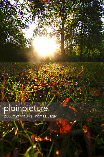 Close-up of autumn leaves on grassy land in park during sunset - p300m2144134 by Thomas Jäger