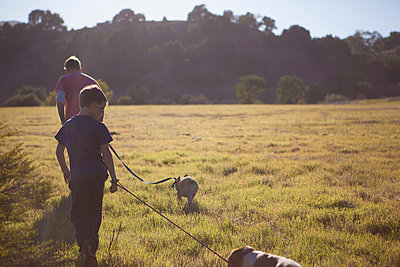 Father and son walking dogs in field - p924m768492f by Raphye Alexius