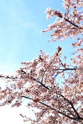 Blüten - p0452740 von Jasmin Sander